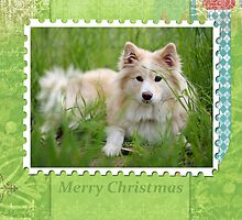 Christmas Card No 6 by FLCV