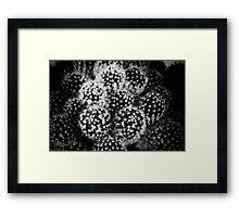 Pinhole Cactus Framed Print