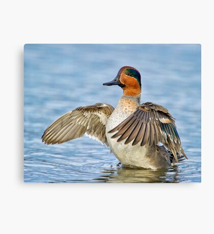 Flapping Away Canvas Print
