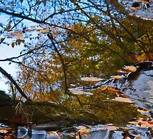 Autumn Leaves by Ron Sentell