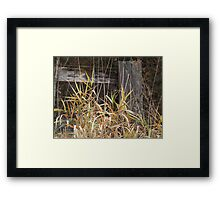 Grass Before Wood Fence Framed Print