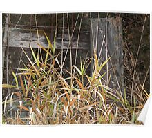 Grass Before Wood Fence Poster