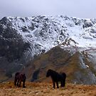 rainsborrow cove and wild ponies by Ilapin