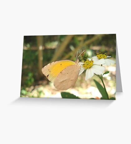 SLEEPY ORANGE ON BIDENS ALBA Greeting Card