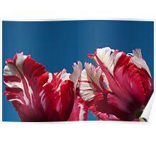 Tulips Estella Reinfeld Poster