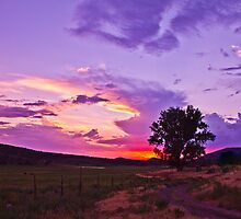 Bostwick Park, Colorado by Susan Humphrey
