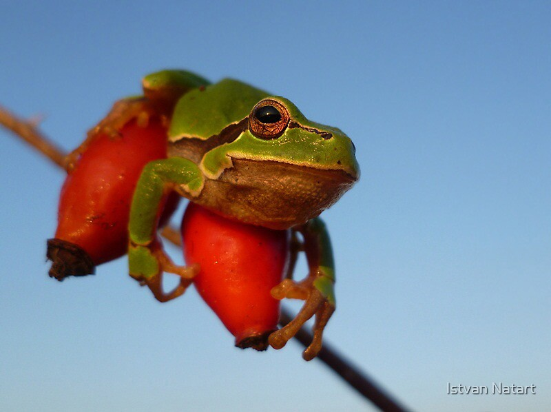 I'll Jump on You ! by Istvan Natart