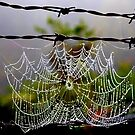 """""""Barbed Wire and Lace"""" by Doyle  McClung"""