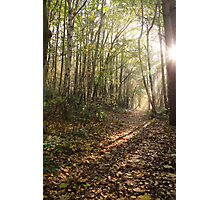 English Kentish woodland Photographic Print