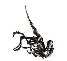 t-rex 1 by GiorgosPa