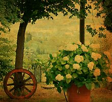 Springtime in Tuscany by Deborah Downes