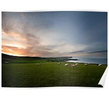 Sunset, Sea and Sheep Poster