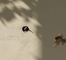 Sparrows living in the wall of Bab-ı Ali (Sublime Porte) by Marjolein Katsma