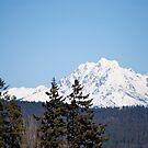 Eastern Washington Snow Obstacles  by Randall Robinson