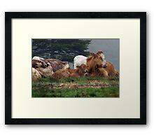 Let Sleeping Cows Lie Framed Print