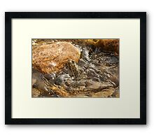 Frog, Rock, and Bubbles Framed Print