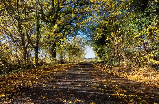Country Lane in Autumn by Nigel Bangert