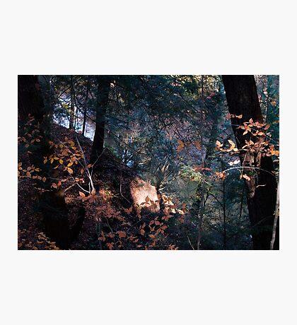 Woodland Enchantment Photographic Print