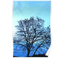 Tree in Silhoette Poster