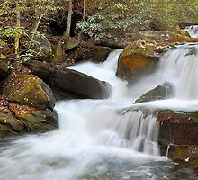 Tremont Mountain Stream by Ron Sentell