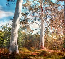 Shady Pond - The Cedars, Hahndorf, The Adelaide Hills, SA by Mark Richards