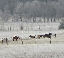 Frosty Morning by Ron Sentell
