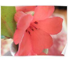 Bokeh Flower- Dedication Poster