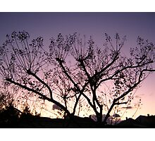 Cold Winter Sky 6 Photographic Print