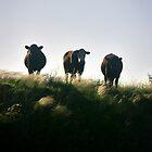 Three On A Hill by Tamara  Kenneally