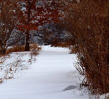 Snowed In Trail by Thomas Young