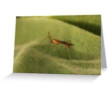 Crane Fly2 Greeting Card