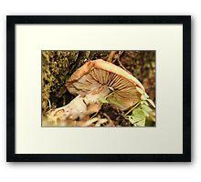 Mushroom from Tree Trunk Framed Print