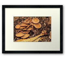 Mushrooms Everywhere Framed Print