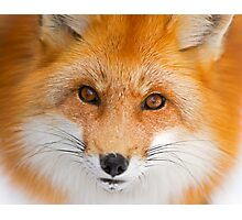 Fox Stare Photographic Print