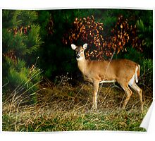 Beautiful Fall Doe Poster