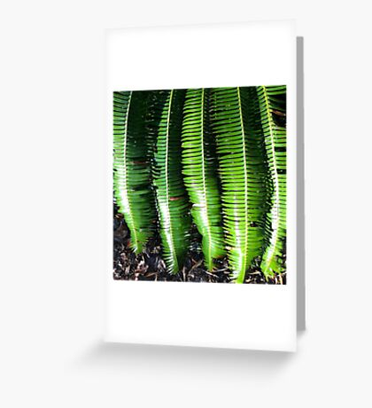 Dioon Spinulosum Greeting Card