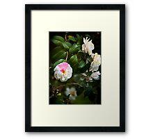 Blushing Camilla Framed Print