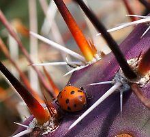 Ladybug by Betsy  Seeton
