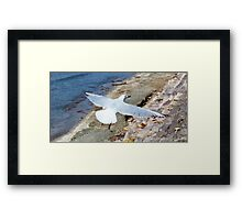 Low Flyer Framed Print