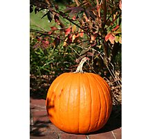 Season of Harvest 3 Photographic Print