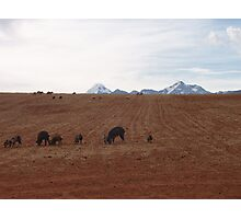 Animals Grazing in Peru's Sacred Valley Photographic Print