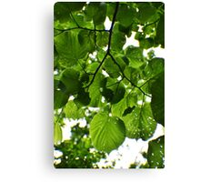 Bright Green Leaves and Branches  Canvas Print