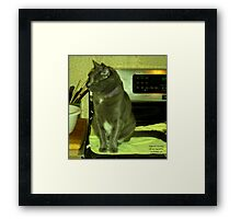 Wooly on the Stove Framed Print