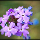 Purple Wildflowers  by Saija  Lehtonen