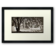 Wise Old Tree Framed Print
