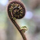 Koru fern by wanderingtrucki