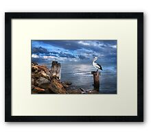 Pelicans Pride - The 2012 Almanac Calendar Front Cover Winner. Framed Print