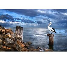 Pelicans Pride - The 2012 Almanac Calendar Front Cover Winner. Photographic Print