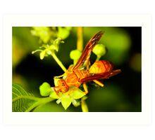 Wasp time Art Print