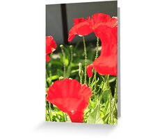poppy season Greeting Card